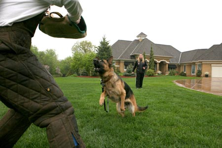 K9 Protection Training